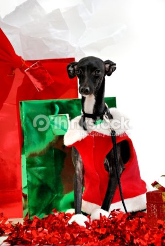 Photo : Have A Doggone Great Christmas