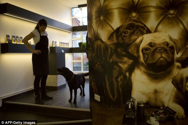 Gourmet Restaurant For Dogs And Cats Opens In Berlin Dog Cat Dogs Pets