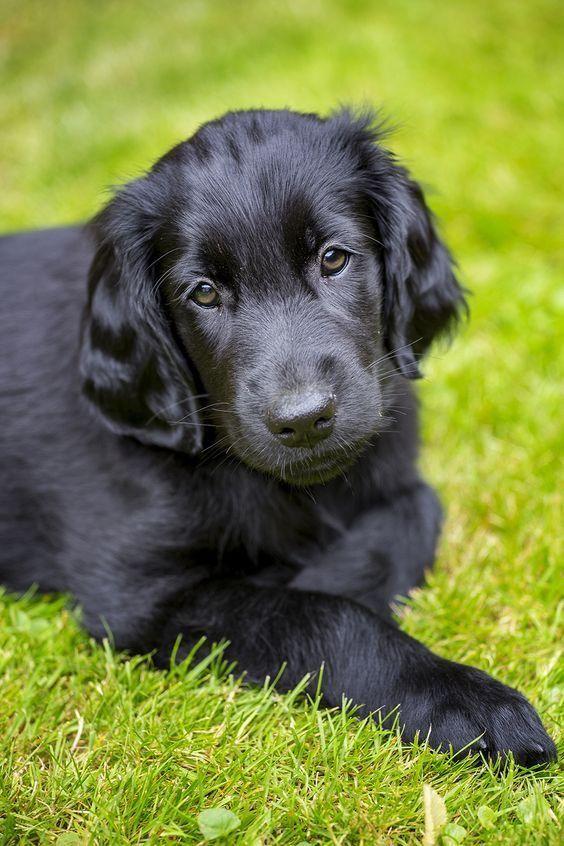 Pin Von B Huber Auf Hunde Hundebilder Lustige Hunde Hunde