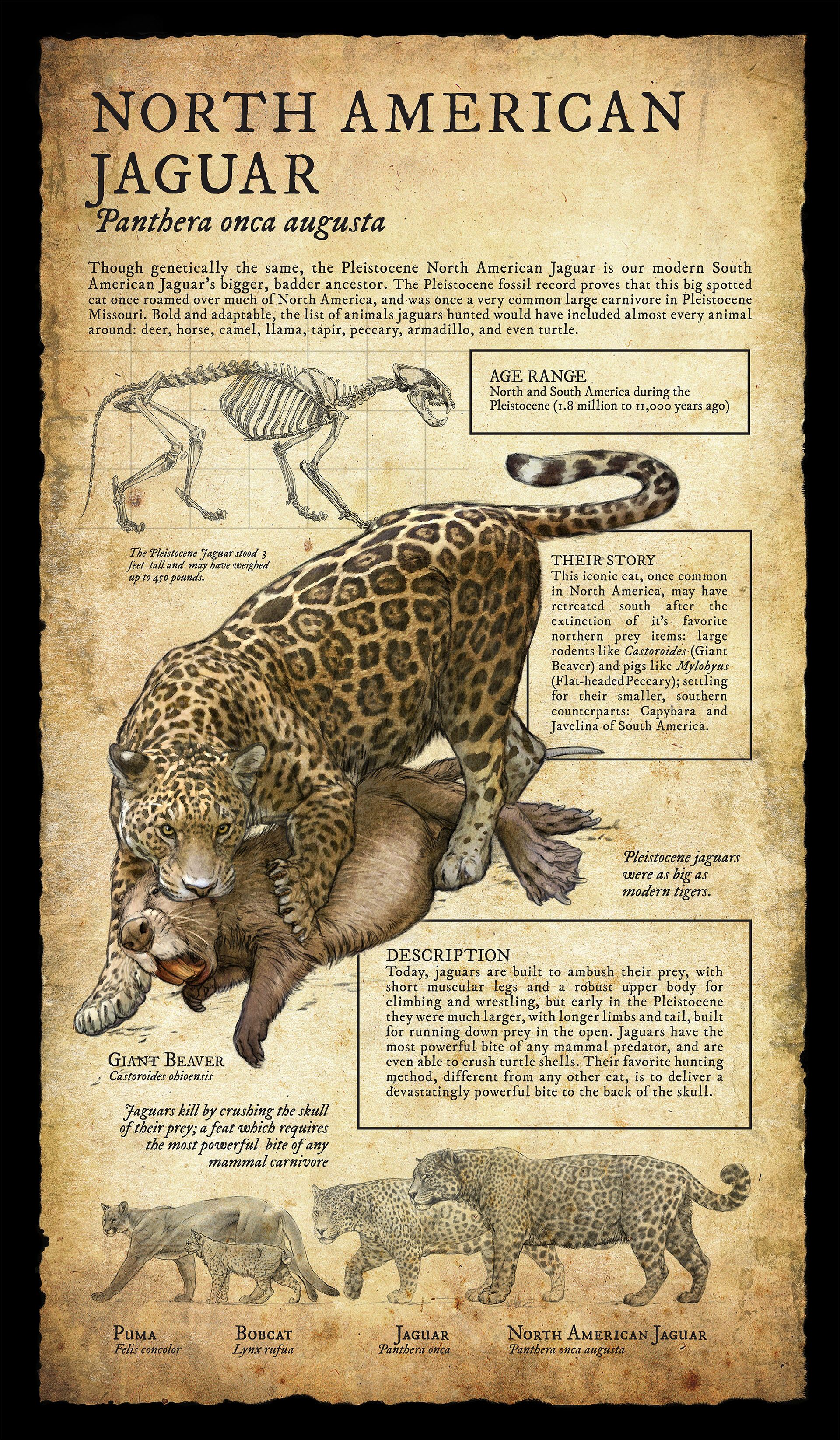 Design And Illustration Pleistocene Ice Age