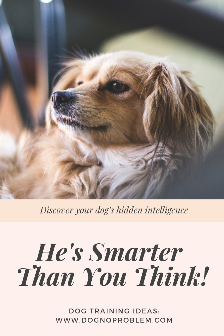 Discount Voucher For Subscription Brain Training 4 Dogs June