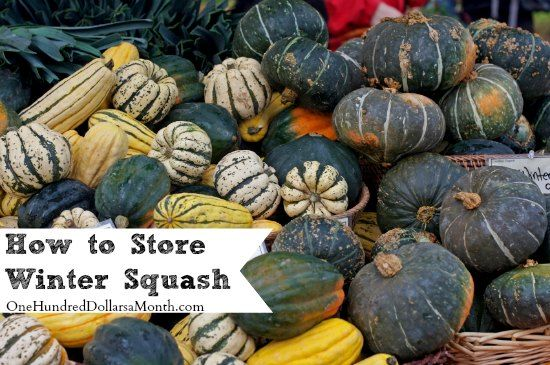 Winter squash are like potatoes. If you store them right, they will seriously last you most of the winter--at least until you can get out and grow yourself some cool weather kale and spinach. To ensure that you get the longest life out of your squash,...