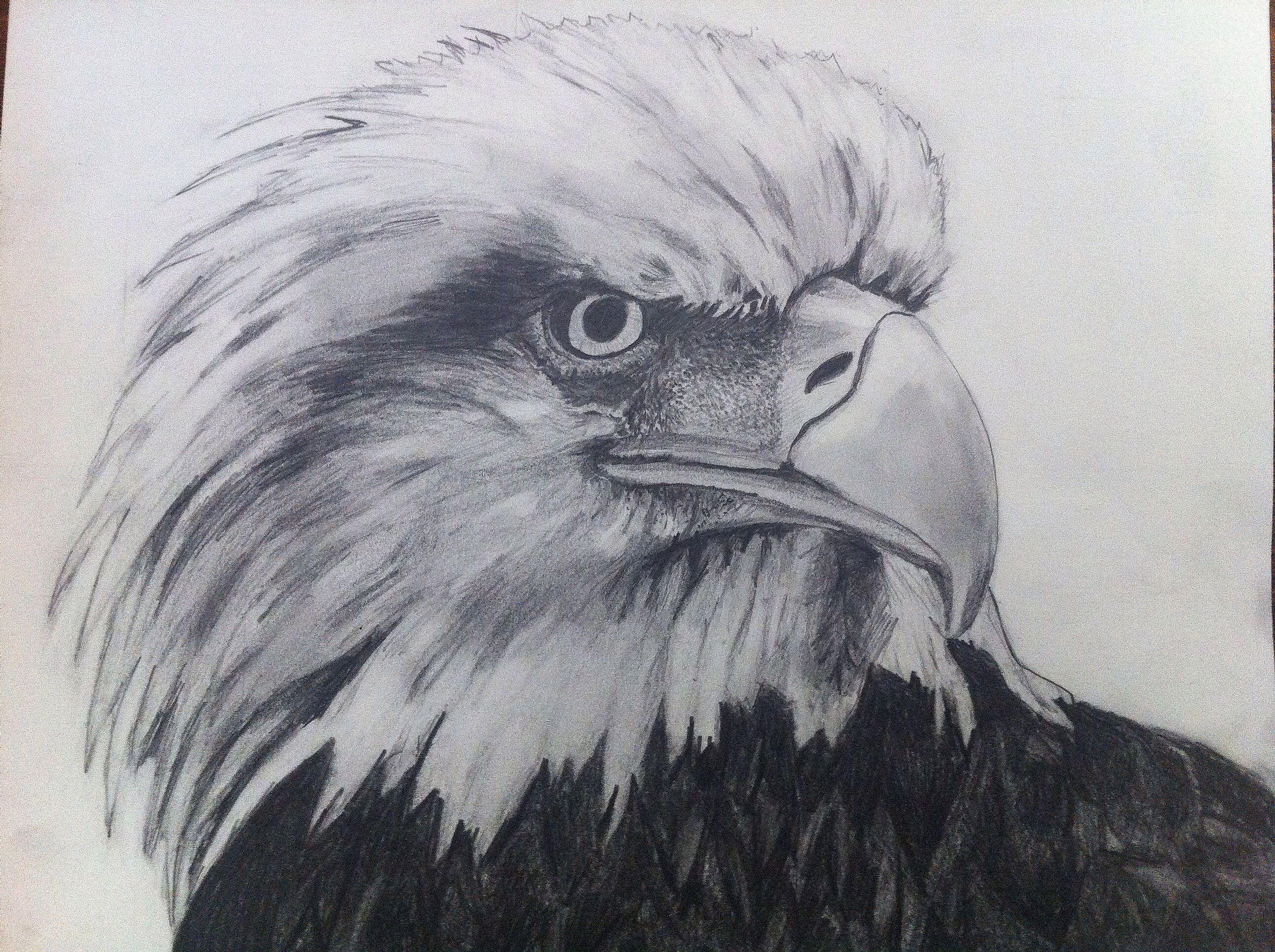Eagle Animal Texture Grid Enlargement