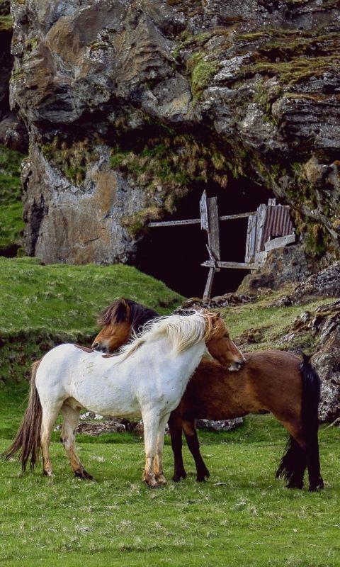 480x800 Wallpaper Horse, Pasture, Farm, Grass, Structure