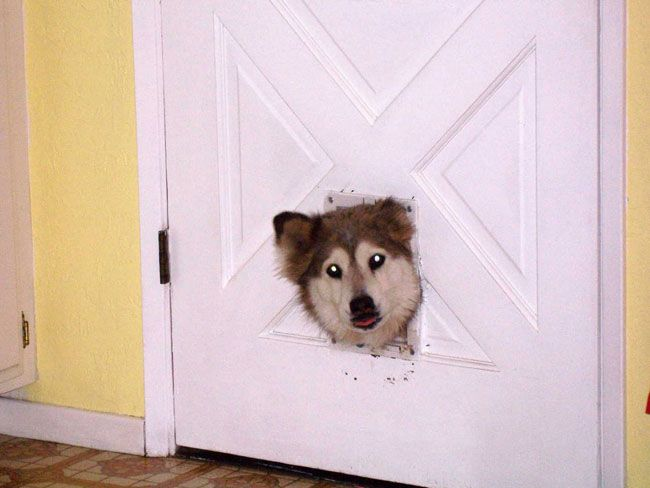 12 Funny Dogs Yes Im a Personality  RawDumps