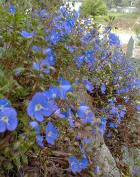 May blooming