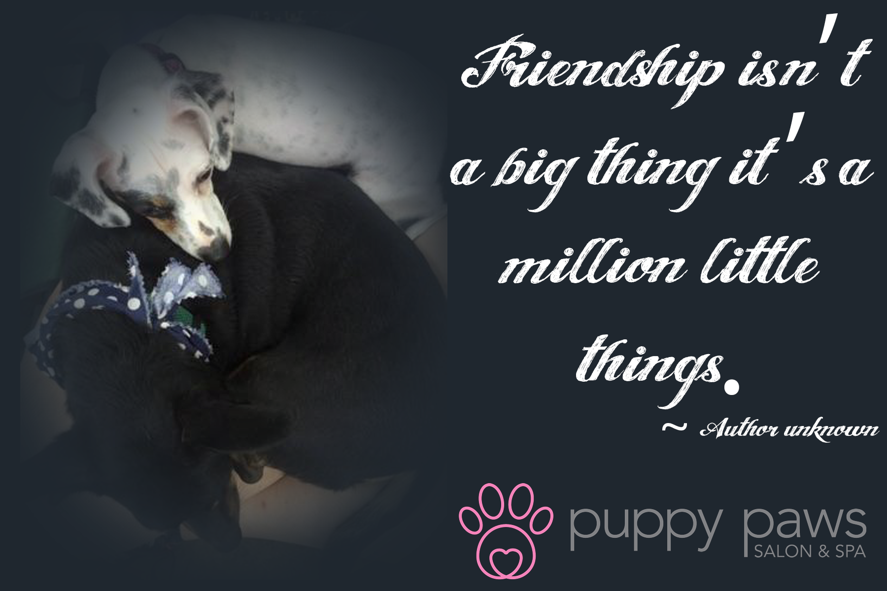 #Friendship isn't a big thing it's a million little things_Author Unknown #DogLovers #DogCare #DogsOfTwitter
