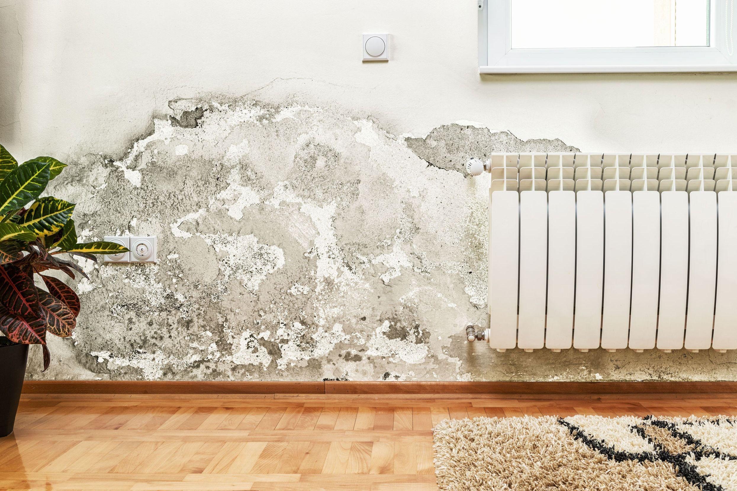 Traiter les problèmes d\'humidité dans la maison | Problème, Journal ...