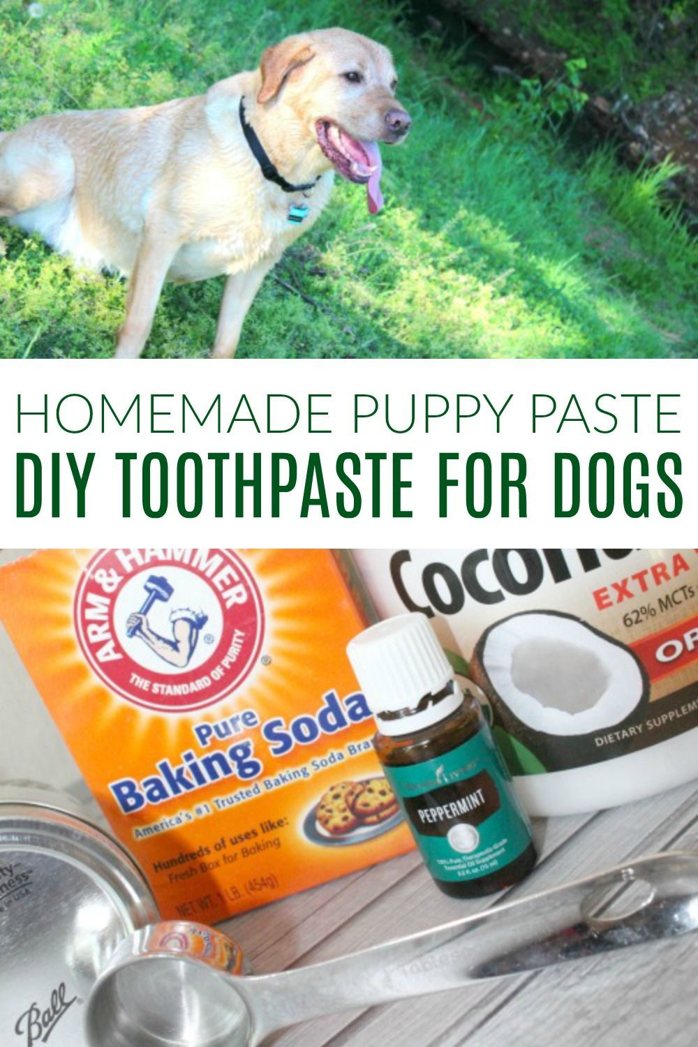 Is Dog Toothpaste Safe For Puppies References