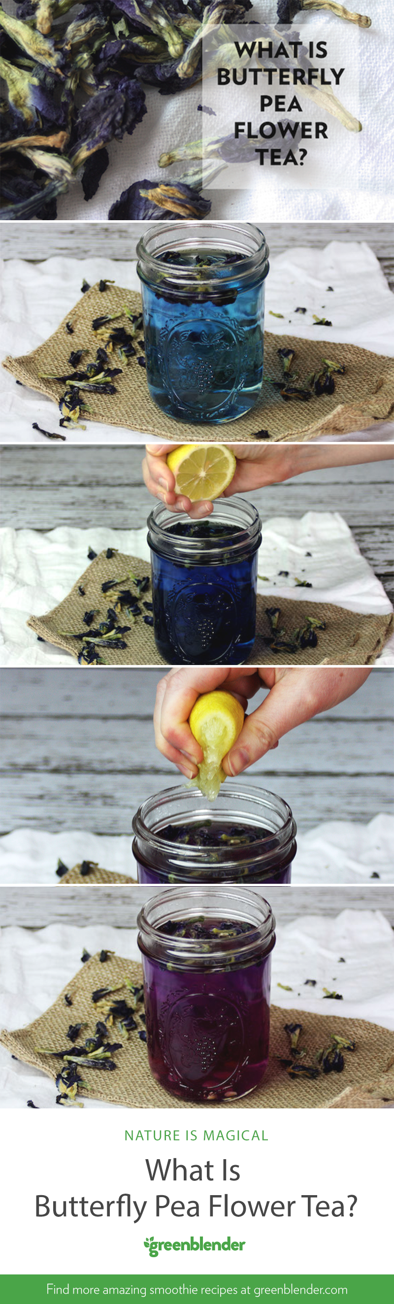 What Is Butterfly Pea Flower Tea? Butterfly pea flower