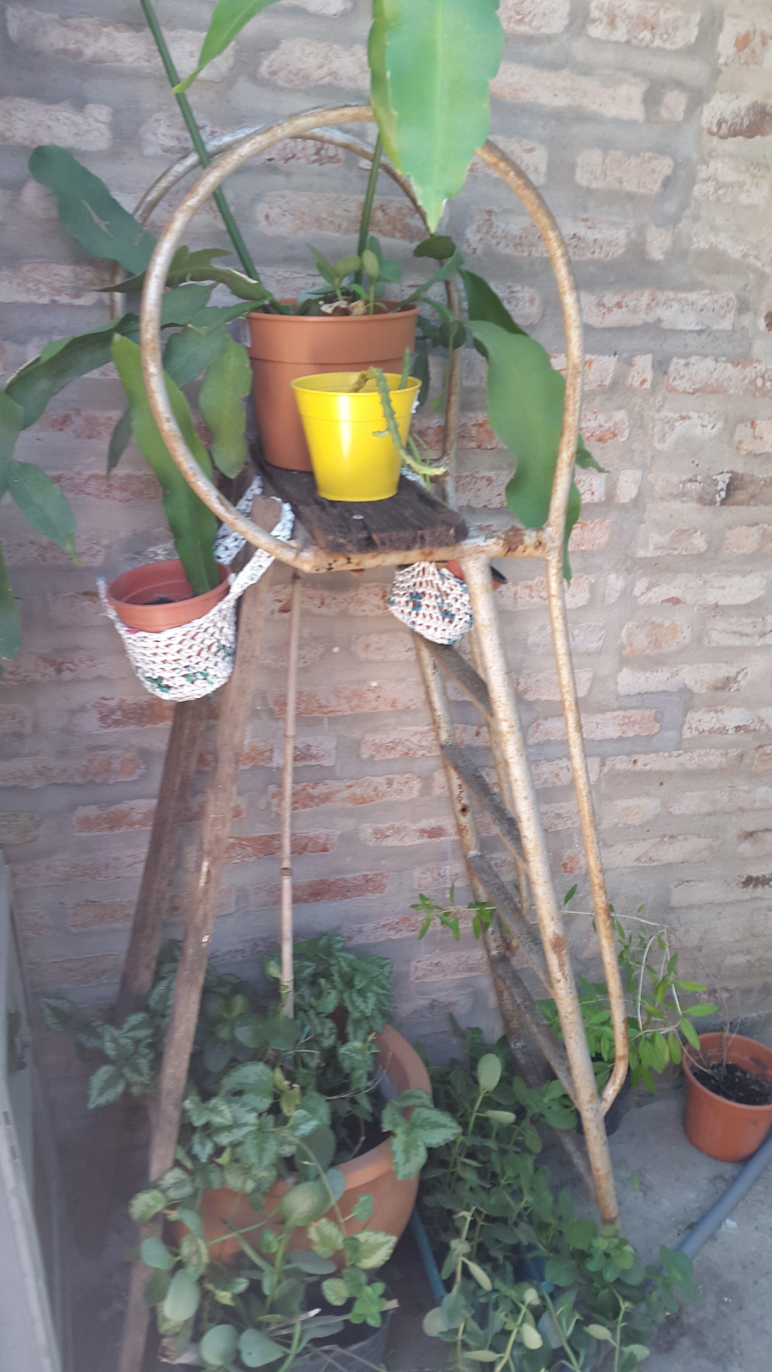 La escalera de un trampolín de pileta puede transformarse en un jardín vertical, para sostener macetas y plantines
