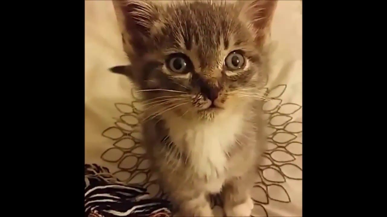 Kitten Sneezes And Farts At Same Time At Http Youtu Be 56tuk6ysn6e Kitten Sneezes And Farts At Same Time Caring For A Pet In Need Of A L Cats Cat Gif Dog Cat