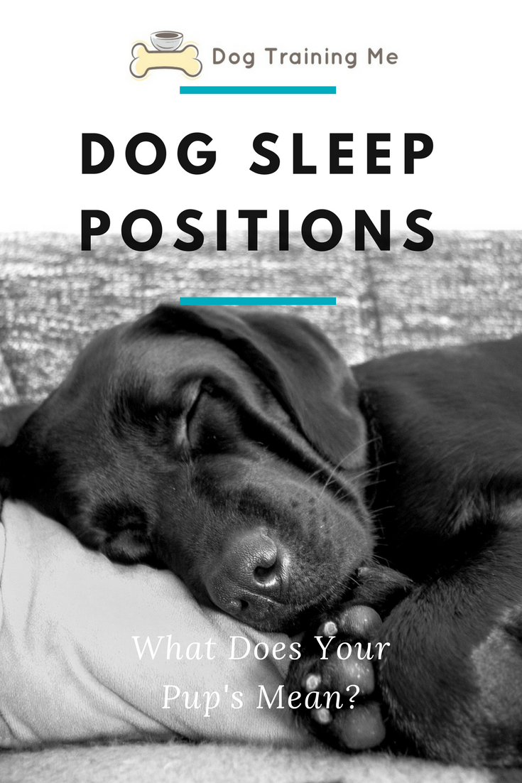 Do you want to know what your dog's sleep position means