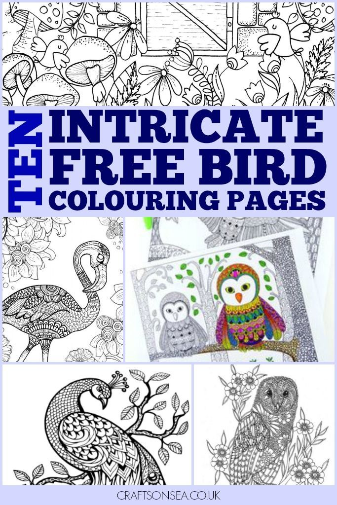 Free Bird Colouring Pages for Adults and Kids | Adult Coloring Pages ...