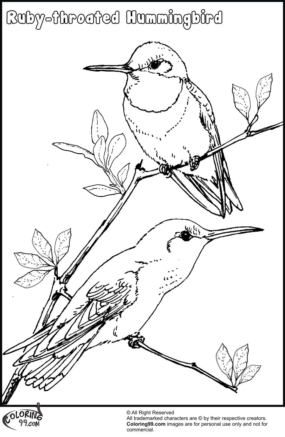 Hummingbird Coloring Pages Coloring Pages Cartoon Coloring Pages Bird Coloring Pages