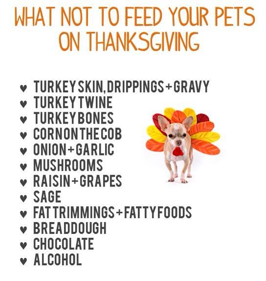 Don't Feed Your Dogs These Items Not Only For Thanksgiving