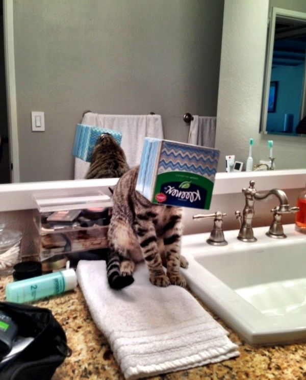 20cats who have noidea what todowith their life