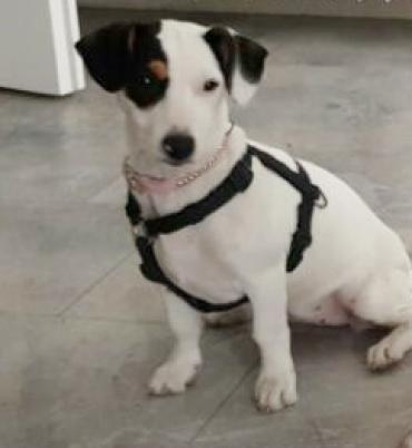 Hund Mischling Mischling Hundin 5 Monate In Herten Nordrhein Westfalen Haustier Tiervermittlung Tiere