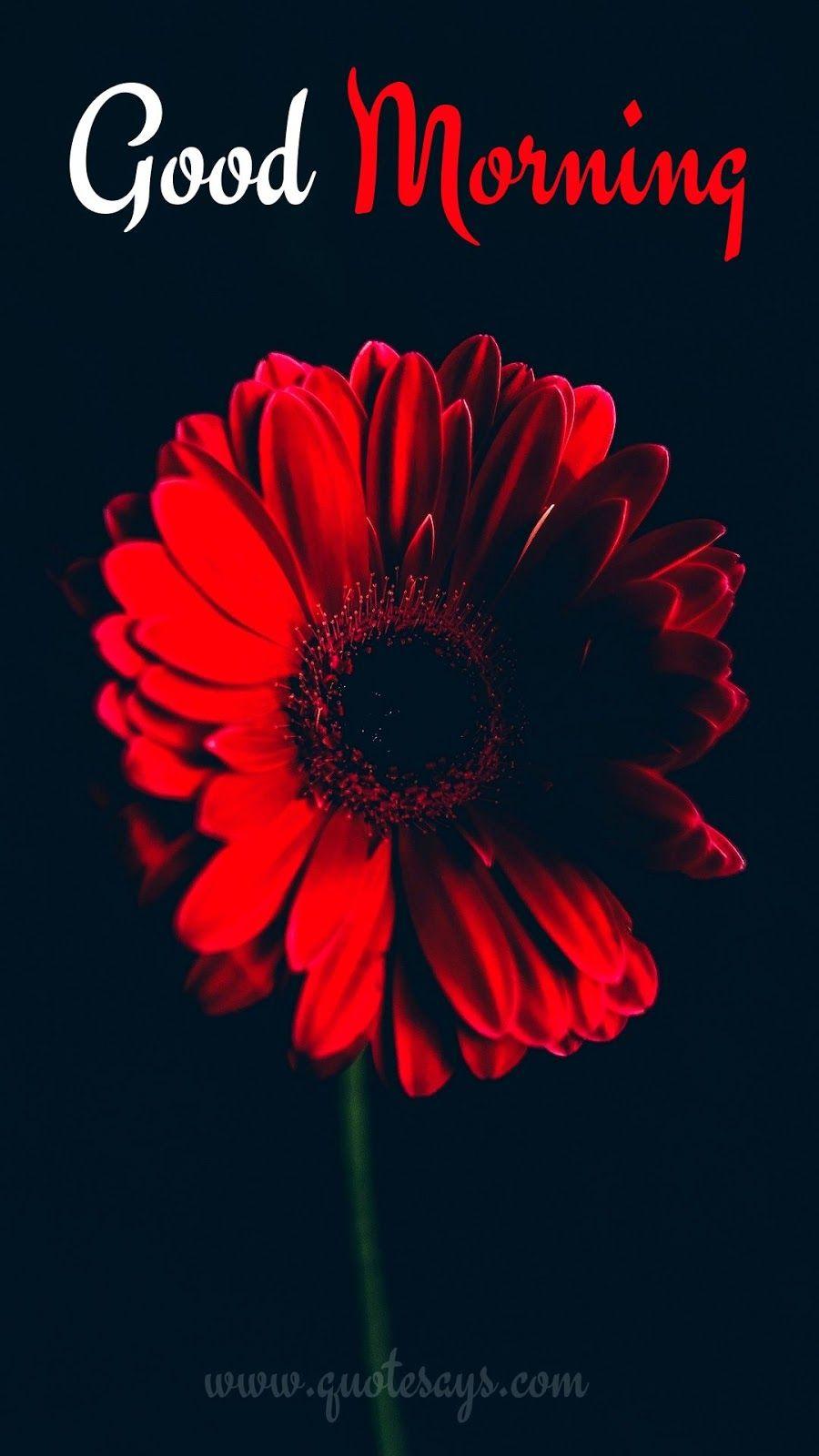 Good Morning Flower Flower Iphone Wallpaper Red Flower Wallpaper Iphone Background Red Flower wallpaper good morning