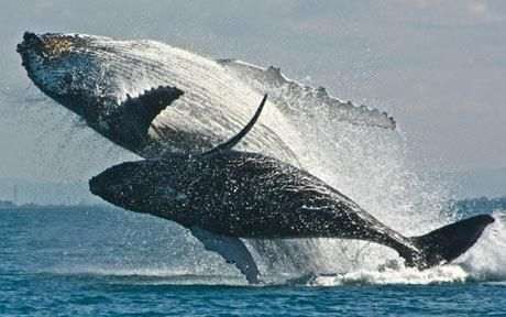 Image result for a pod of whales