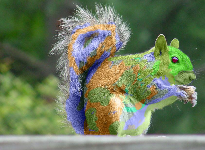 Rainbow Squirrel Rainbow Squirrel 1 By Canyousayrawr On