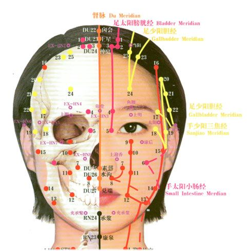 acupuncture points face chart: Free acupuncture point diagram acupuncture point wall chart