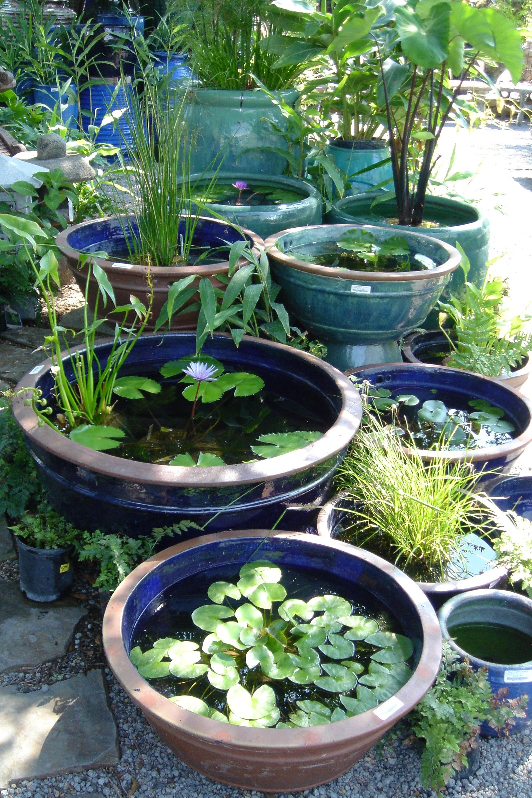 Pots Make Great Tub Gardens Small Water Gardens Container Water Gardens Water Features In The Garden