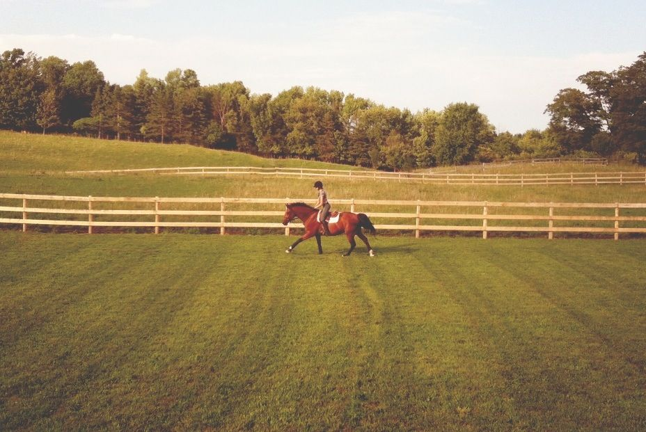 Canter in the corral