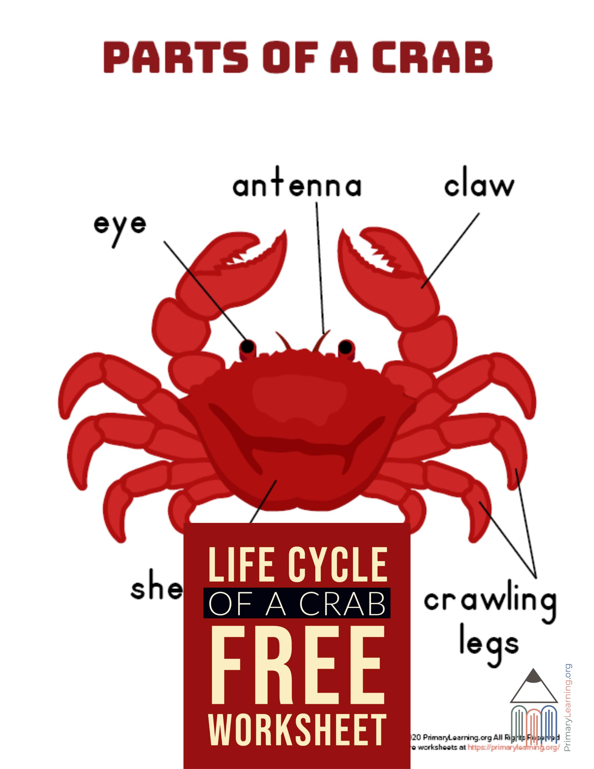 Parts Of A Crab