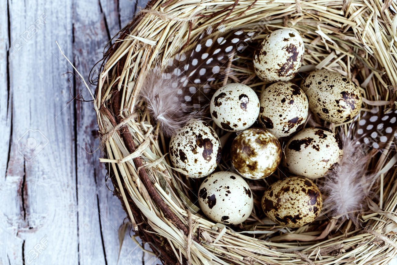 feathers eggs - Google Search