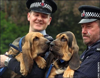 Police are cutting back dog sections because the animals are too expensive to keep, Manchester, UK