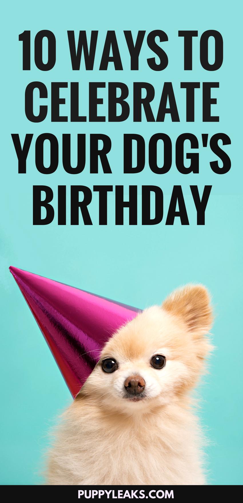 10 Fun Ways To Celebrate Your Dog S Birthday Dog Birthday Happy Birthday Dog Funny Dog Mom