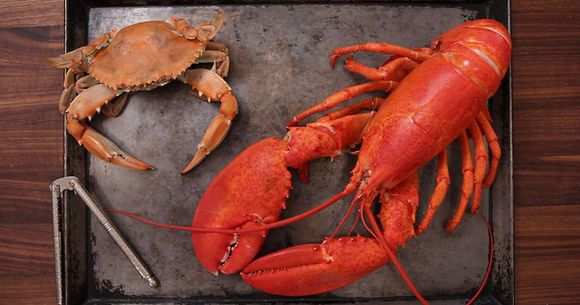How to Crack Crabs and Lobster