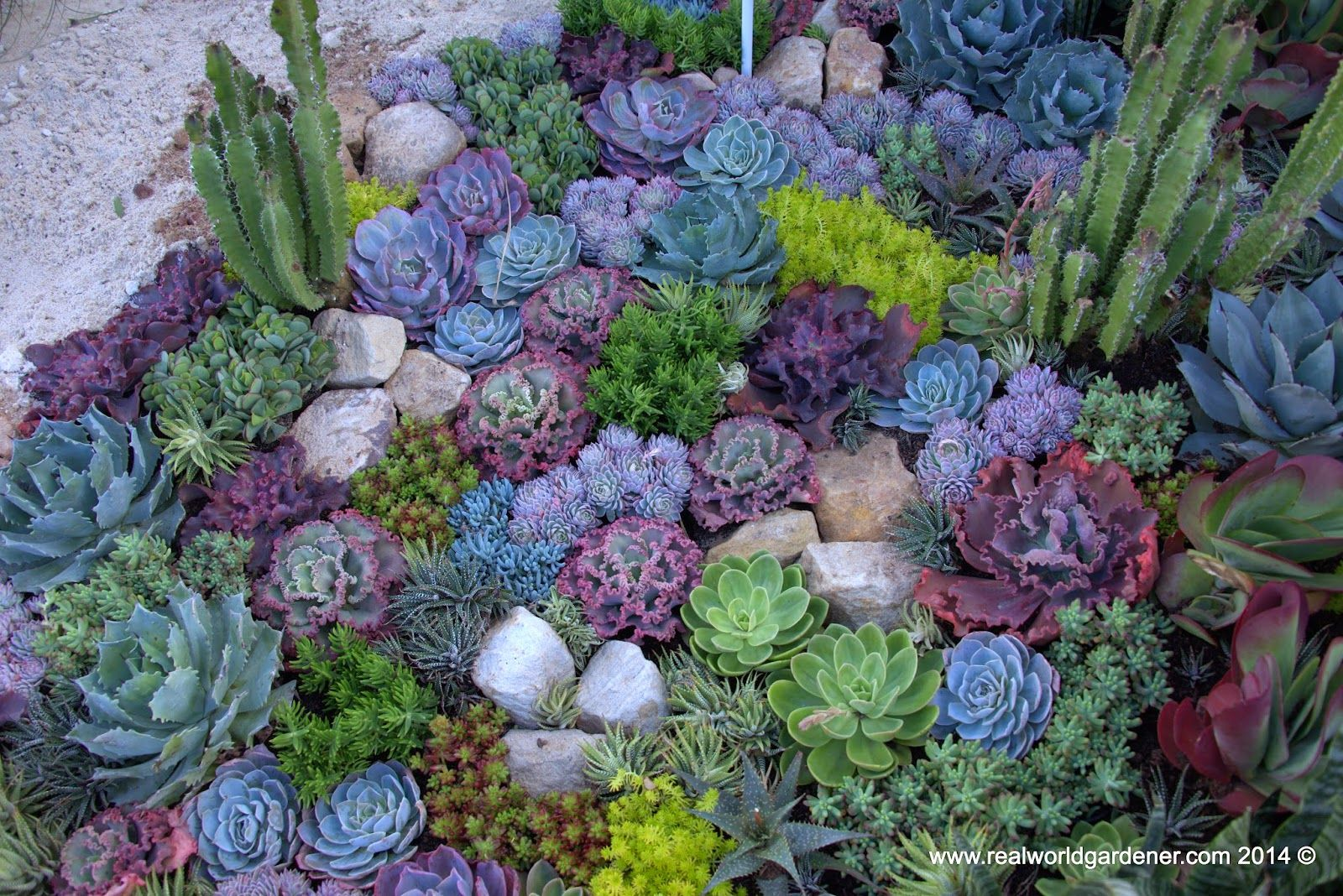 Real world gardener create a succulent garden in design for Garden design ideas by the sea