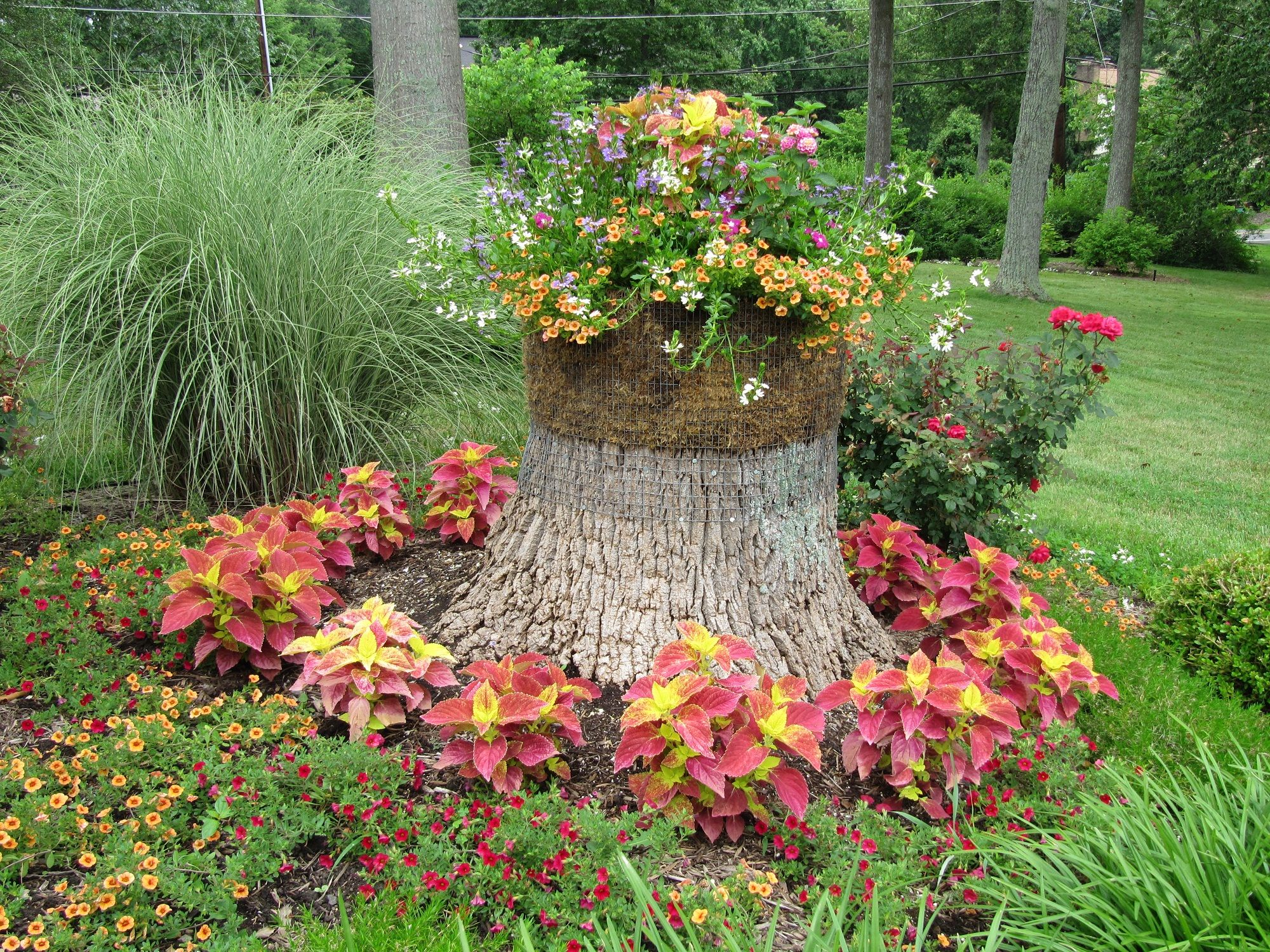 Annual flower bed design ideas award winning containers for Flowers for flower bed ideas