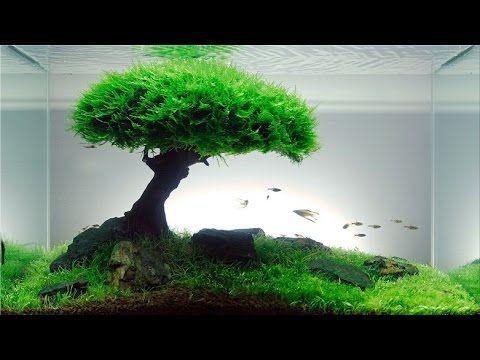 Tutorial Bonsai Tree Aquascaping Youtube Planted Aquarium Aquarium Ikan Aquarium Air Tawar
