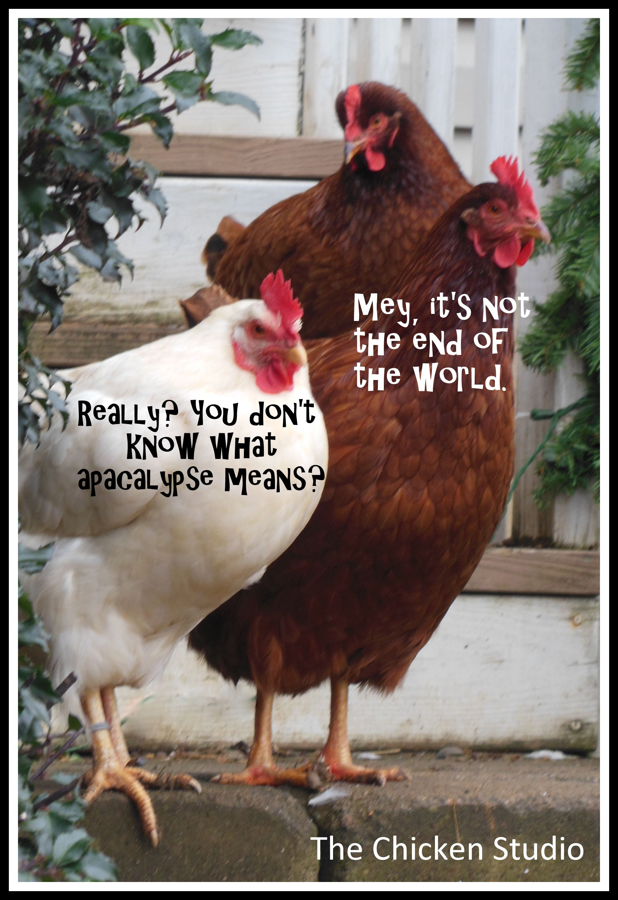 Rough Day Chicken Meme