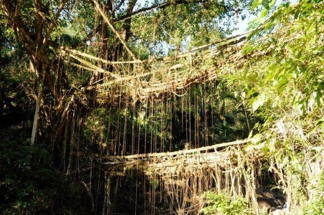 living-bridge-india