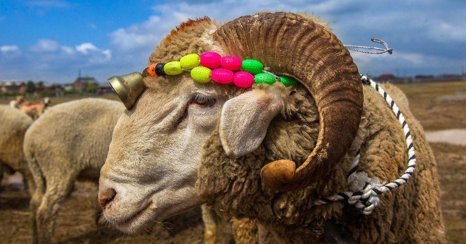Festival marca peregrinação a Meca - 2015 - Fotos - UOL Notícias