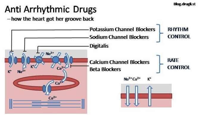 EMS Pharmacology: Drugs That Affect the Cardiovascular ...