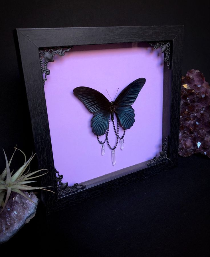 Photo of Taxidermy Oddities Butterflies Insects and by OddityAsylum on Etsy