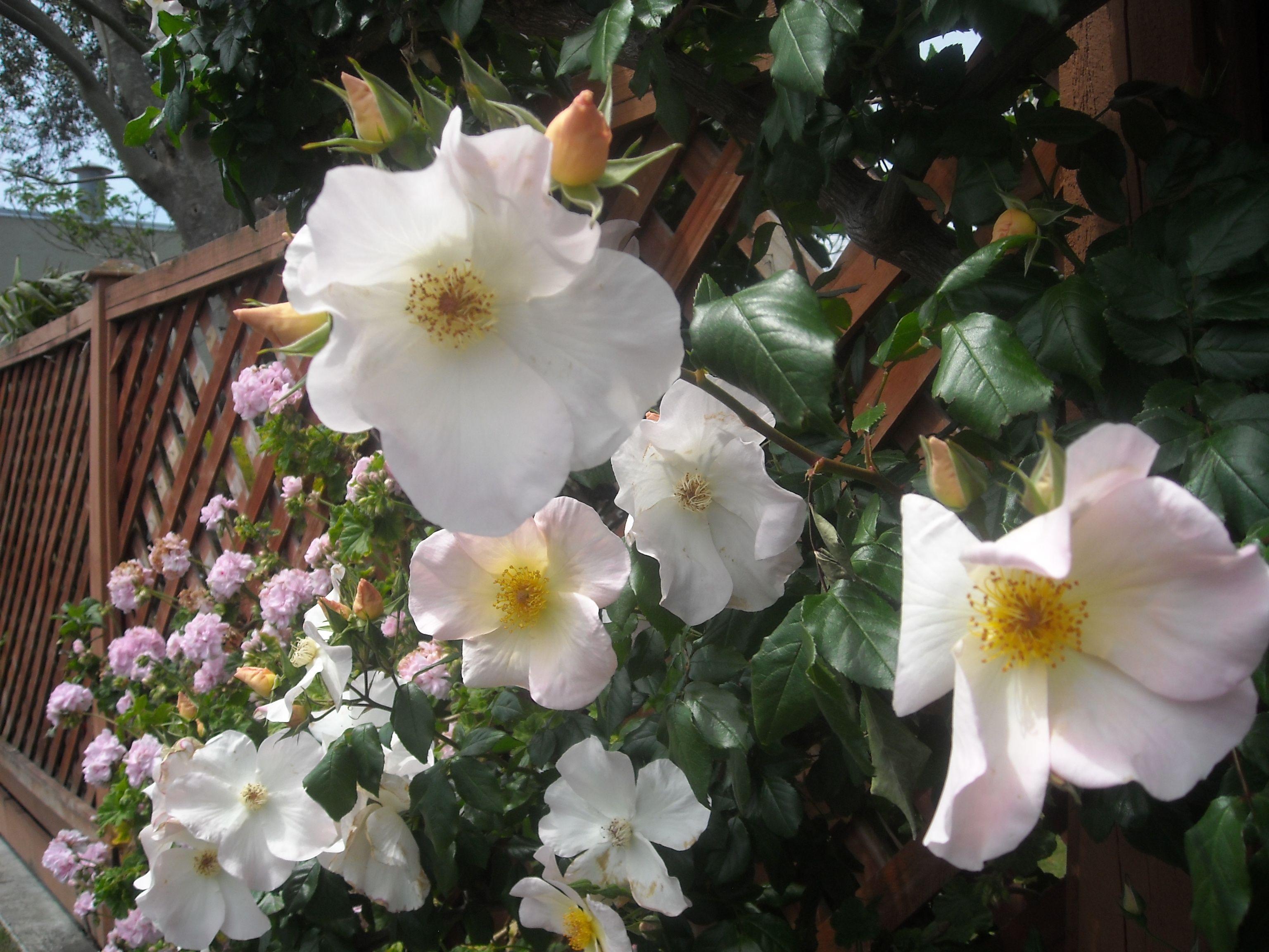 Flowers In Childers Road Elgin Gisborne New Zealand