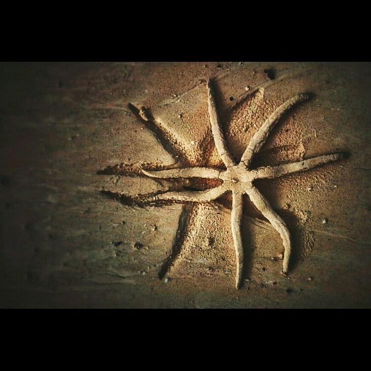 Estrella de mar.Zanzibar.