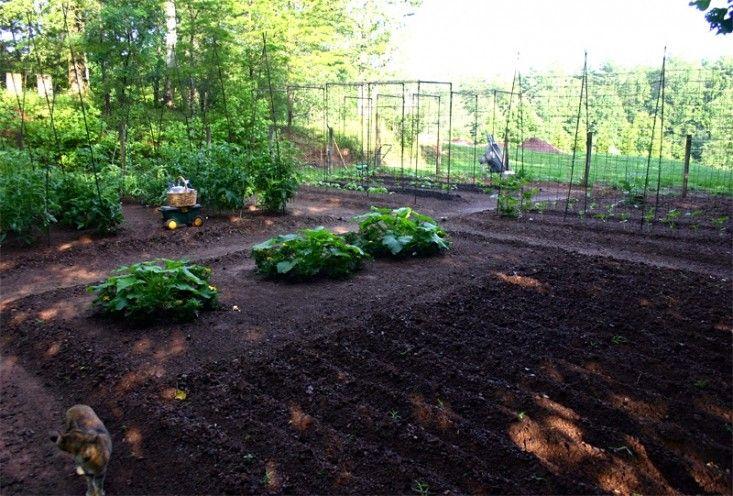 bean-tunnel-diy-vegetable-garden-14-gardenista