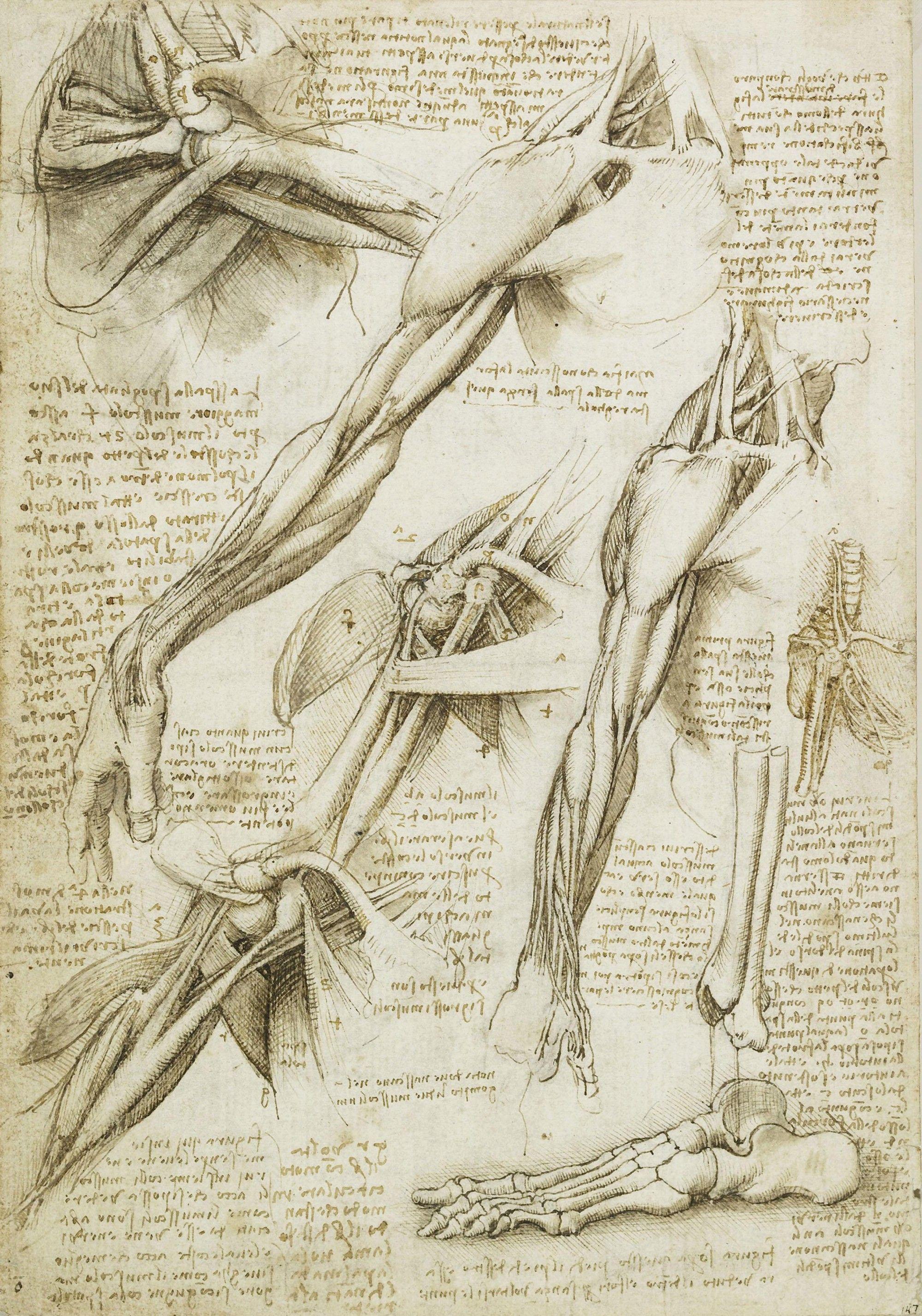 Leonardo da Vinci | ARTE | Pinterest | Anatomía, Masaje y Arte
