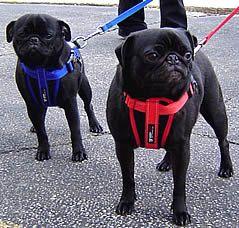 Ezydog Harness Car Seatbelt Dog Harness Dogs I Love Dogs