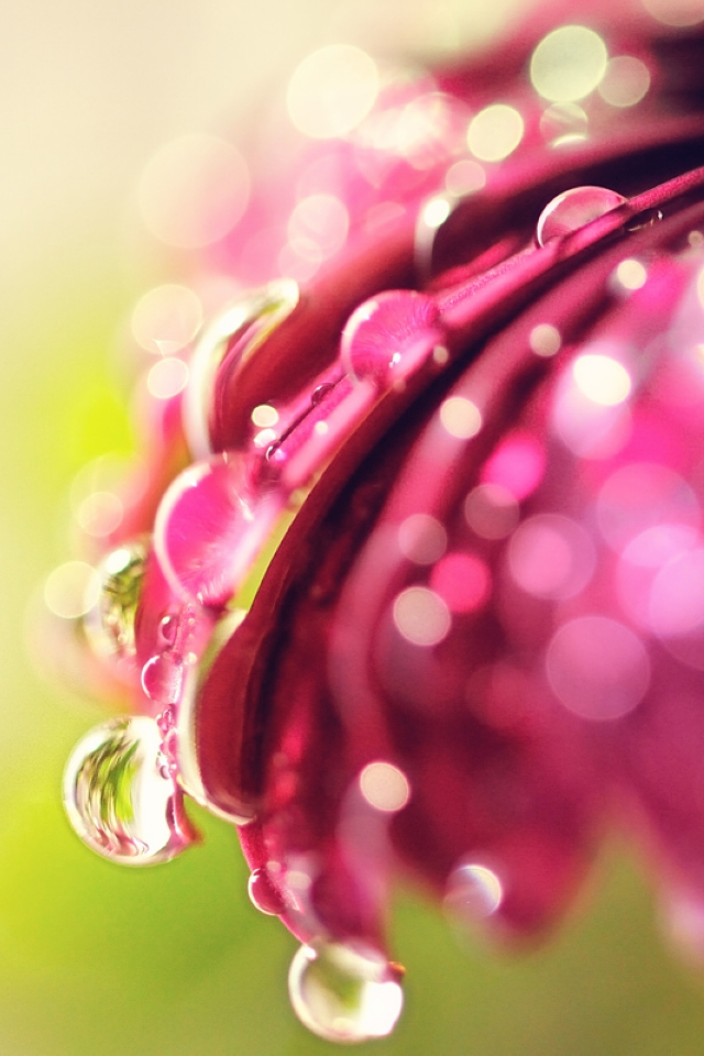 pink flower with rain drops