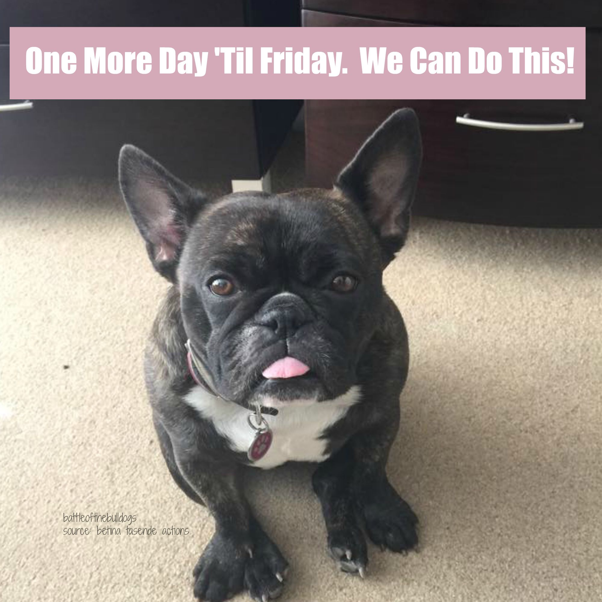 One More Day Til Friday We Can Do This This French Bulldog Is