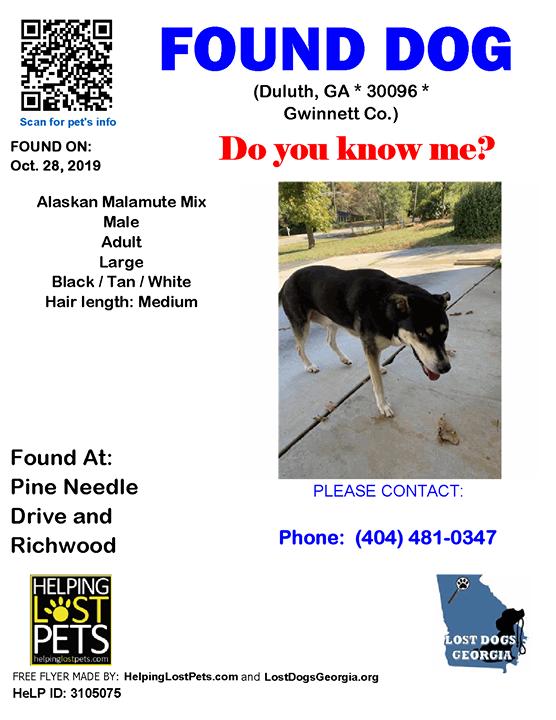 Pine Needles And Dogs : needles, #Duluth, (Pine, Needle, Drive, Richwood), 30096, #Gwinnett, 10-28-2019, Alaskan, Malam…, Losing