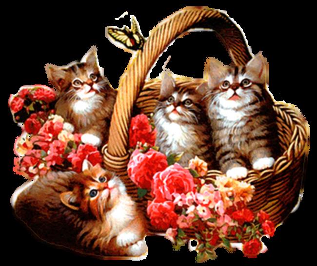 Открытки розами, плейкаст открытки с котами